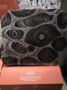 Granite with Orbicular Structure